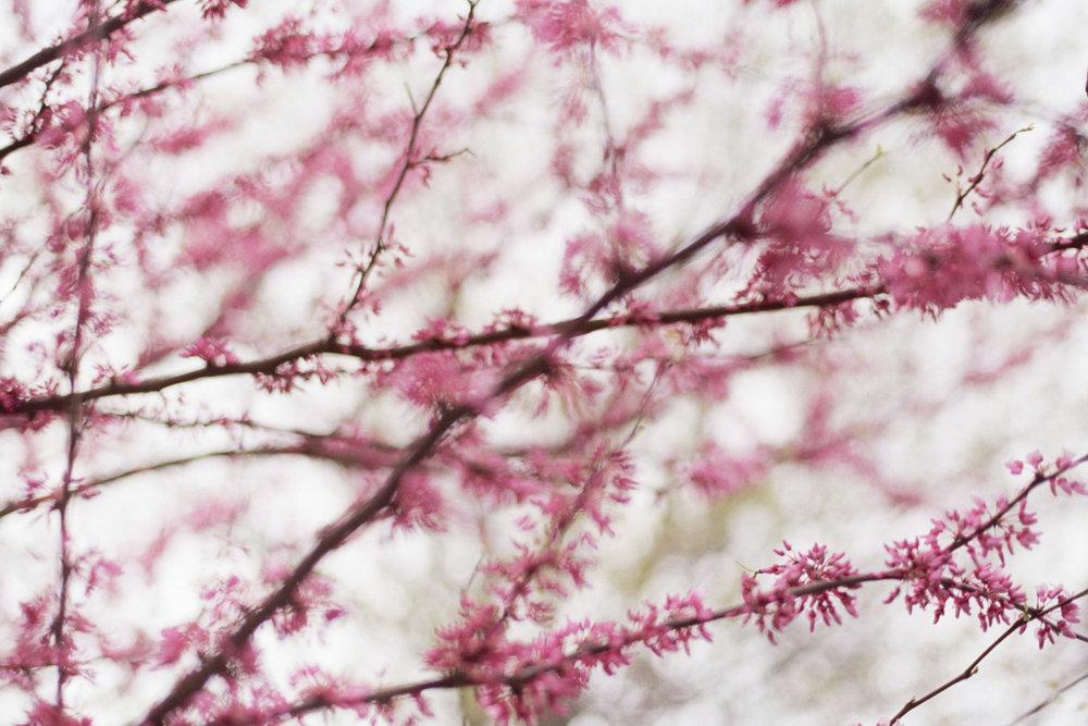 blur-3524.jpg