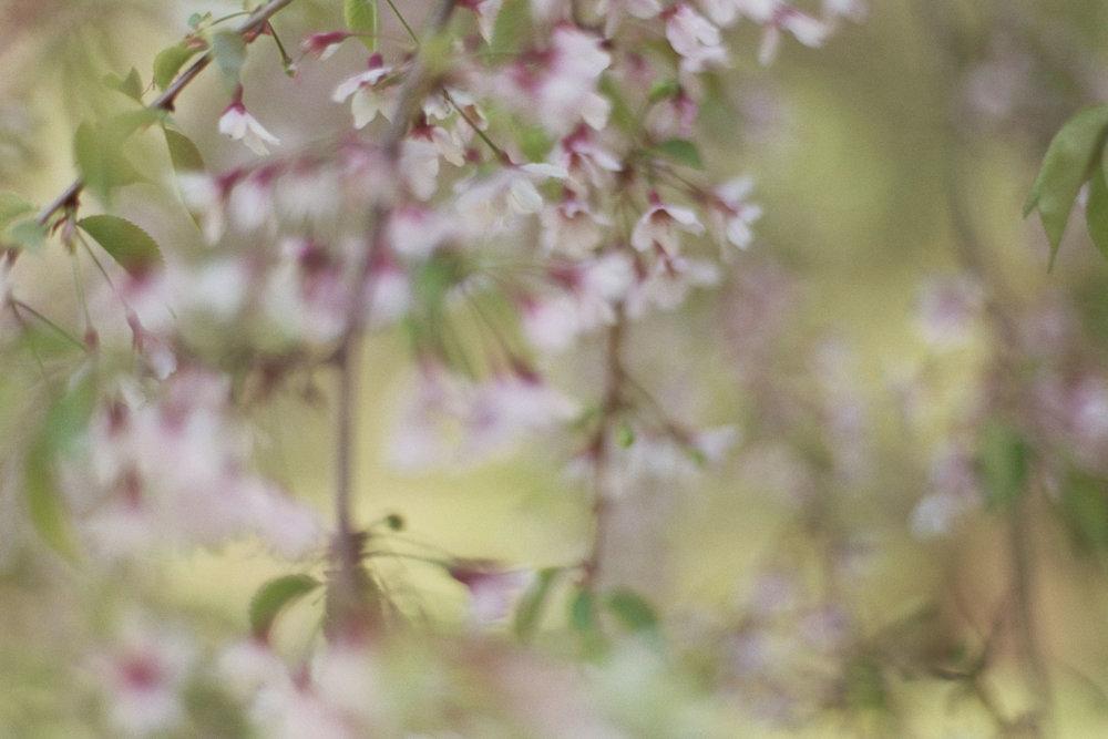 blur-3510.jpg