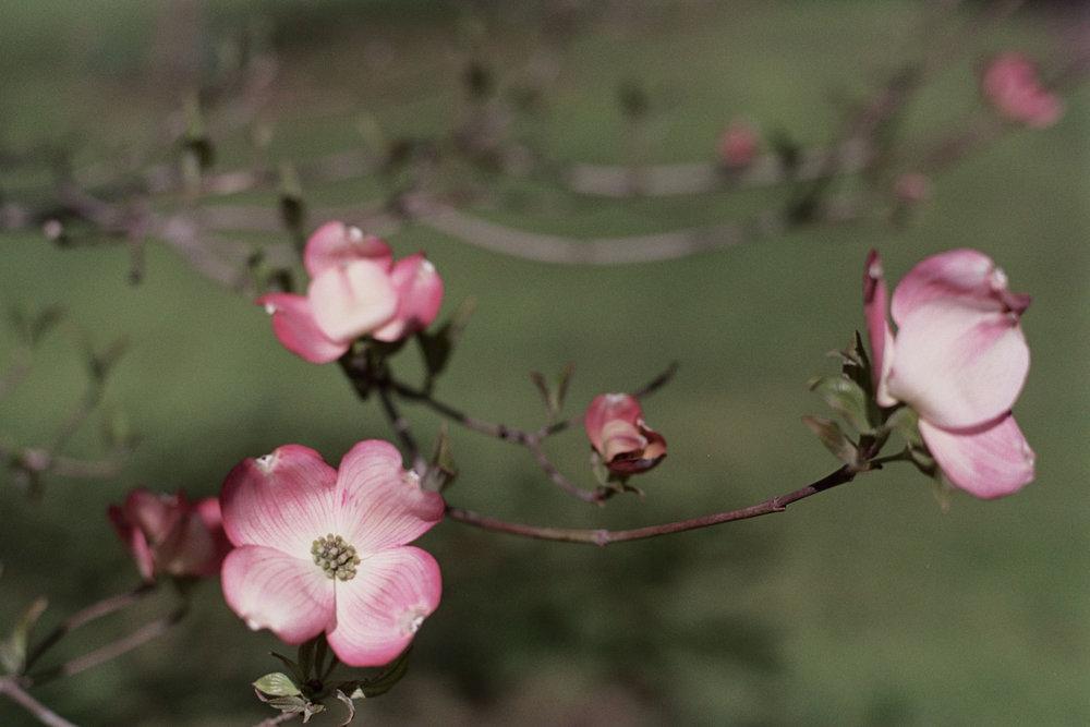 blur-3567.jpg