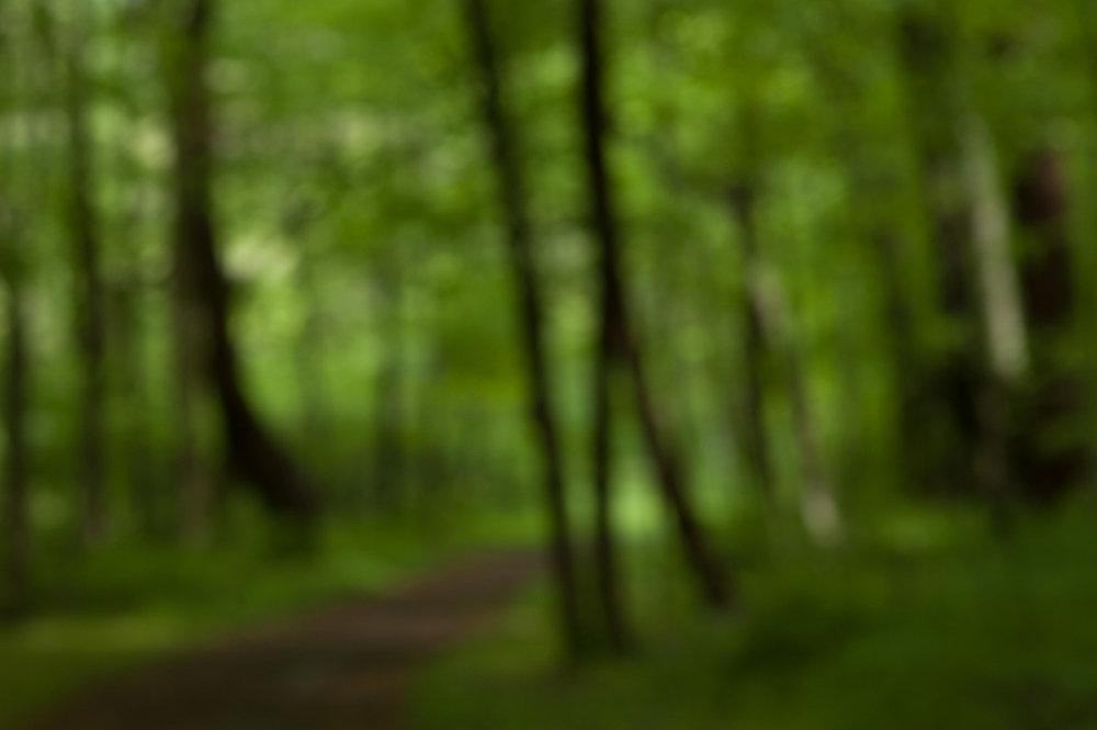 woods walk-36334.jpg