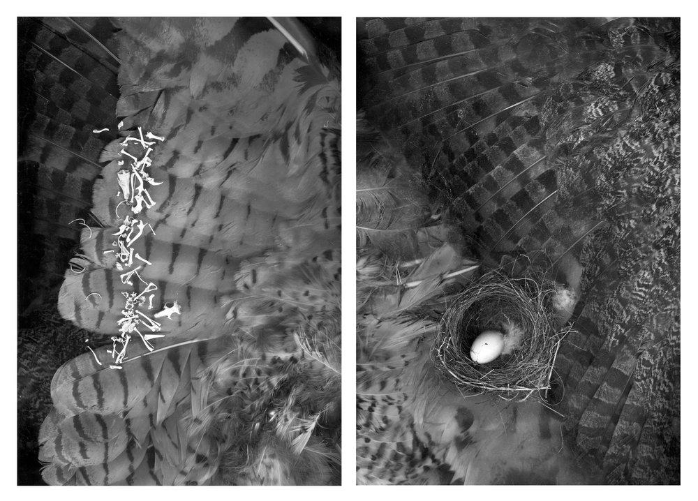 Wing Bone & Egg dyptic.jpg