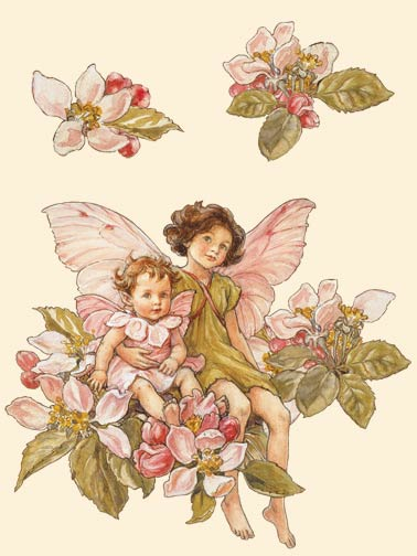 apple-blossom-flower-fairies-by-cicely-mary-barker