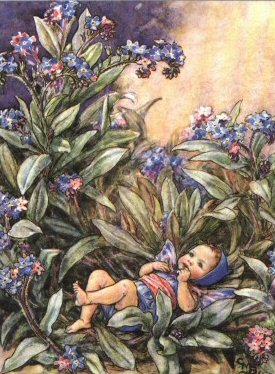 forget-me-not_fairy_cicely_mary_barker