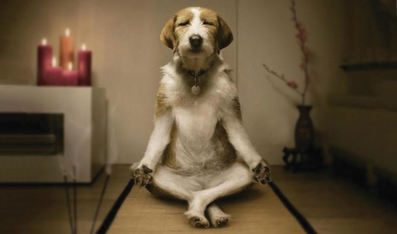 mindfuldog-wide