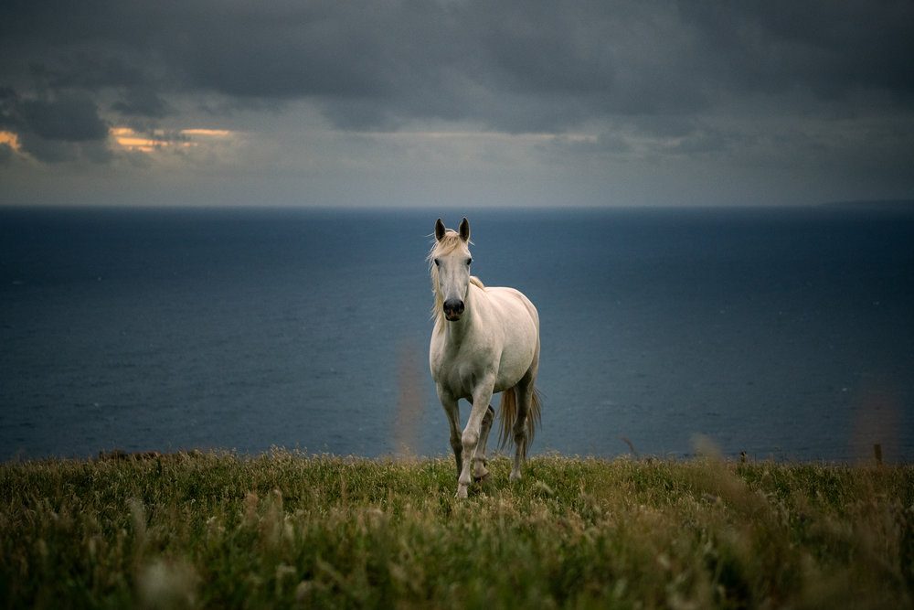 A horse after sunset.