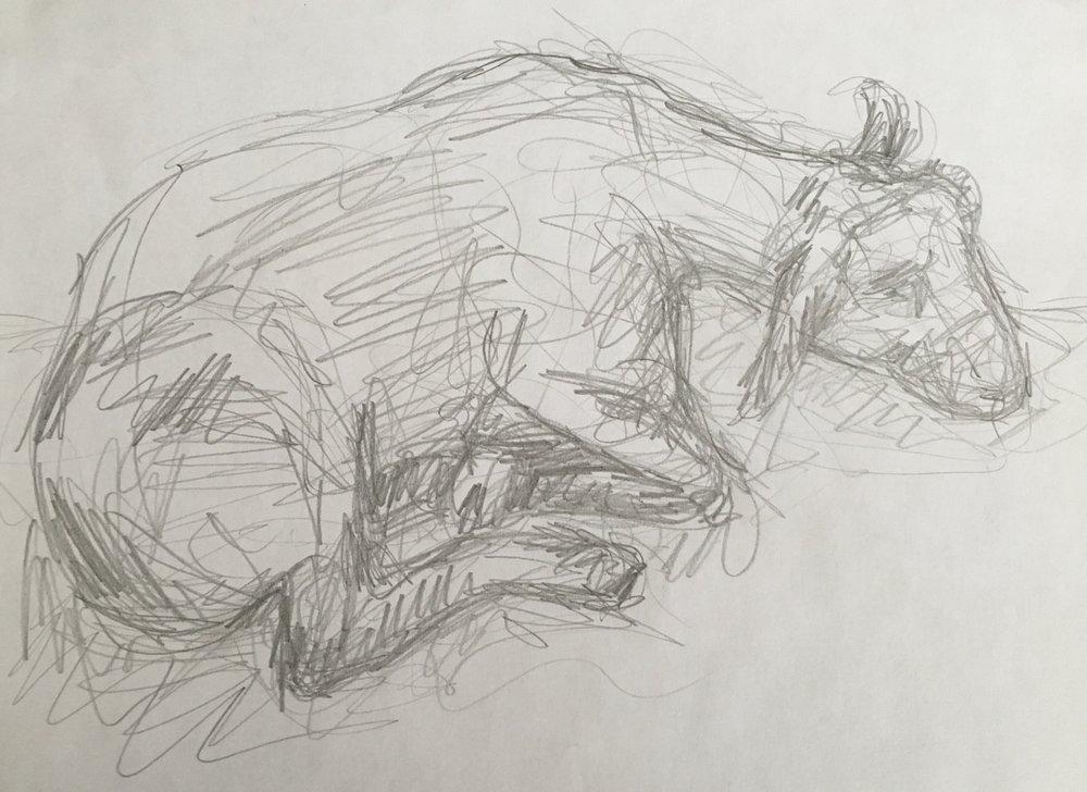 Lamb sketch