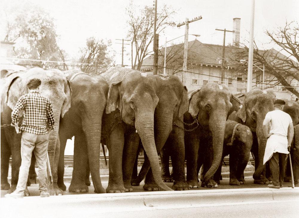 Elephants 13-1989H2.jpg