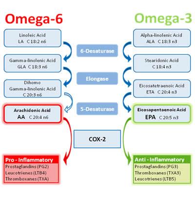 Roseville Family Chiropractor Omega 3 chart.jpg