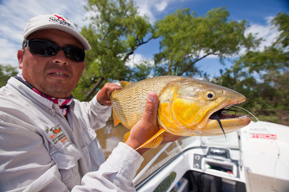 Golden-Dorado-Parana-Guide.jpg