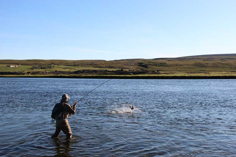fishing_laxa_7.jpg