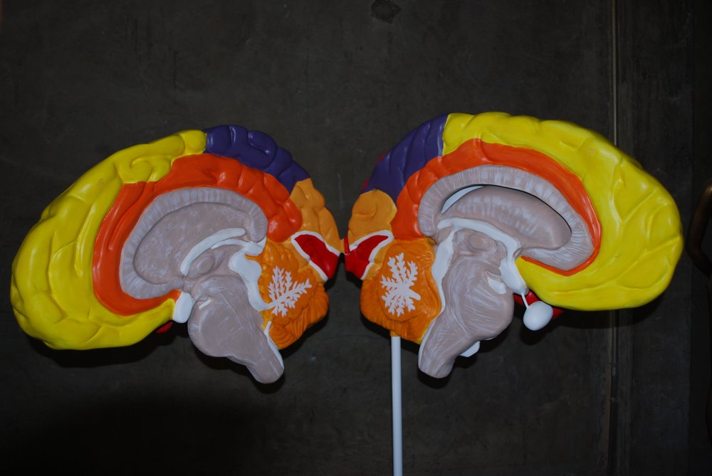 Over Sized Brain Model