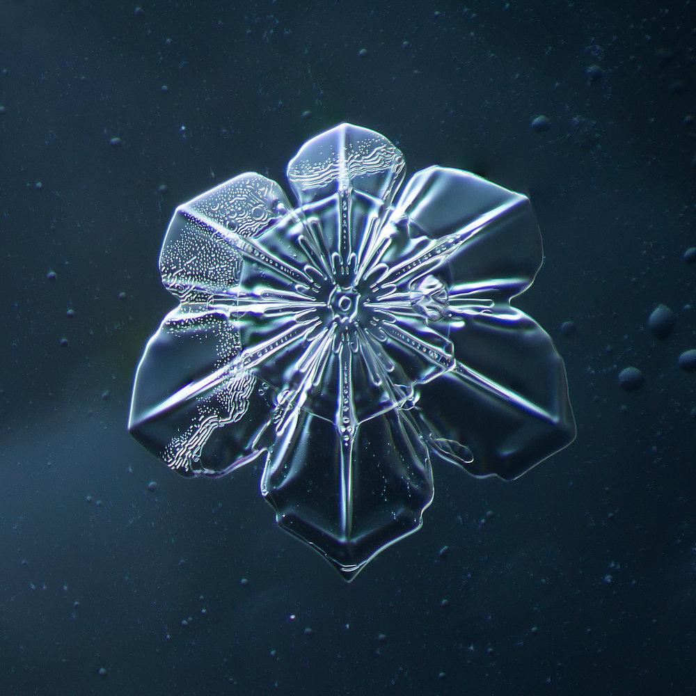 Snowflake 2014.02.09.2014.1.JPG