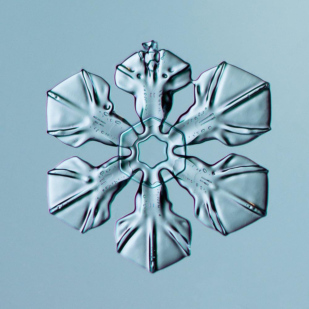 Snowflake 2014.02.16.024.1.JPG