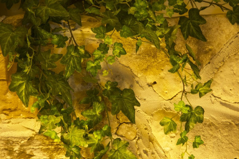 DSC_2770 vines horizontal!....1500 .jpg