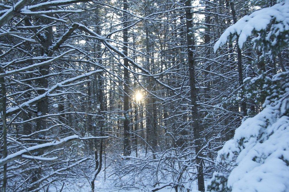 DSC_2997 snowy forest dc .1500 pix.jpg