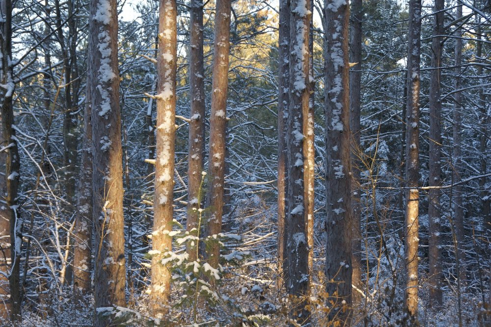 DSC_3100 JAN 18. SNOWY FOREST LT 1500 PIX!!! .jpg