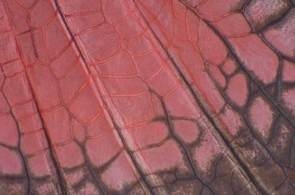 45x30acrididae copy.jpg