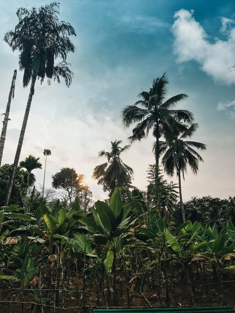 Banana plantation, Thattekad