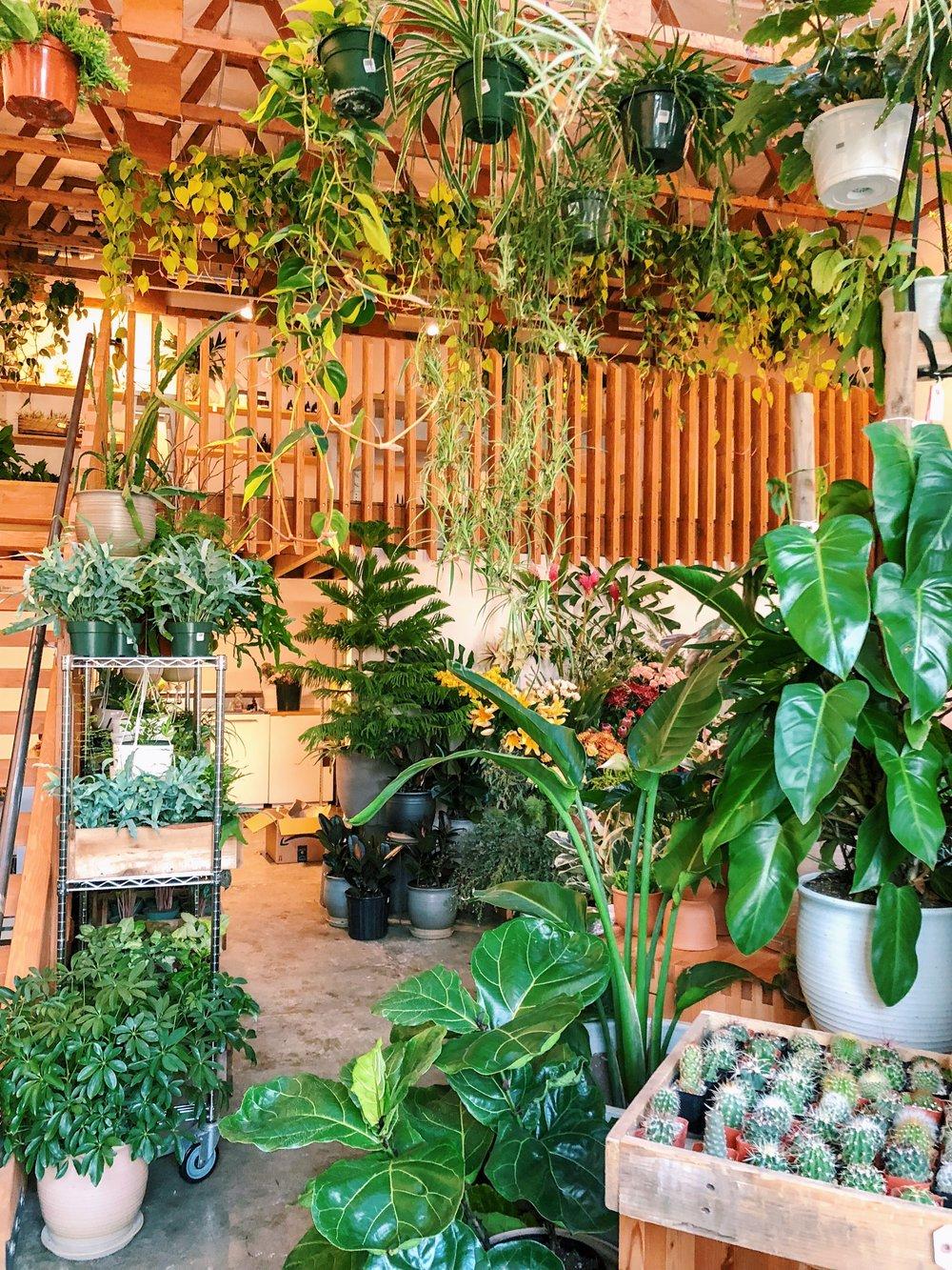 Solabee Plants and Botanicals