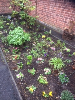 flowerbed.JPG