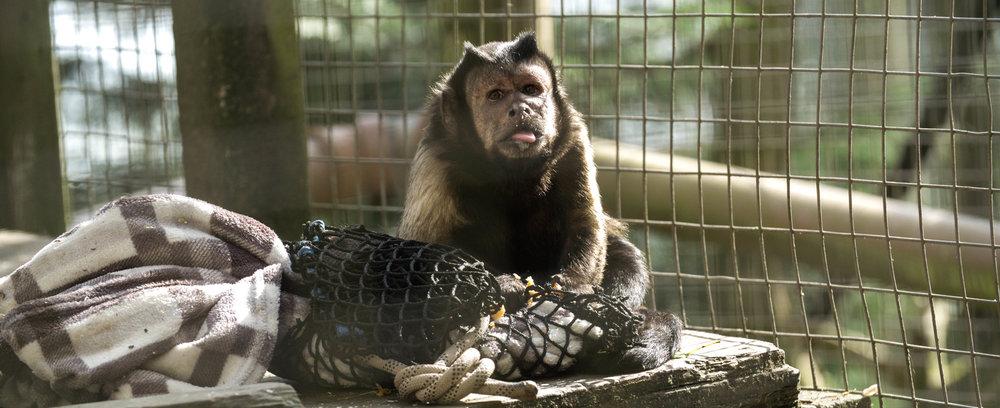 monkey edit 3.jpg