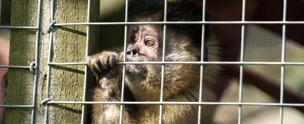 monkey edit.jpg