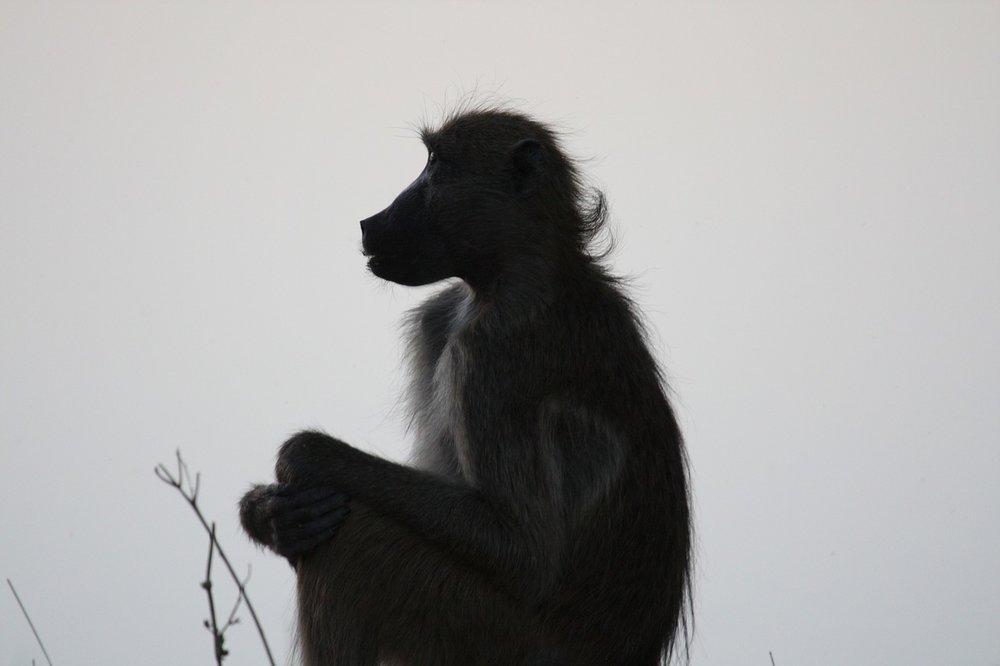 monkey-895960_1280.jpg