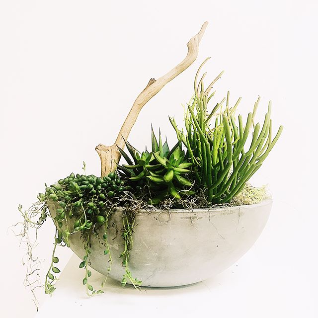 Come see their living creations in the MENAGERIE exhibition on display till June 11 / 338 Newbury St. 3rd floor / Thurs + Fri 2-6pm + by appointment. Follow the link in profile to graze & collect! #galleryoh String of Pearls $275 Mossy Branches $200