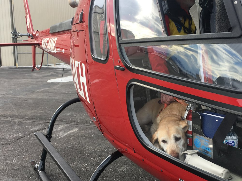 K9 Trigger is a helicopter pro!