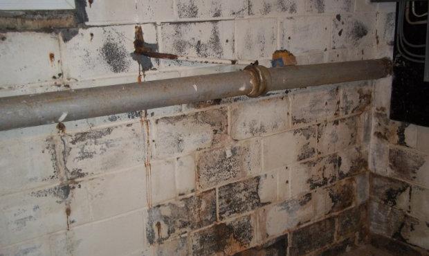 mold inspection.jpg