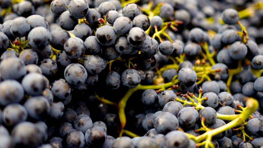 abundance-alcohol-berries-357742.jpg