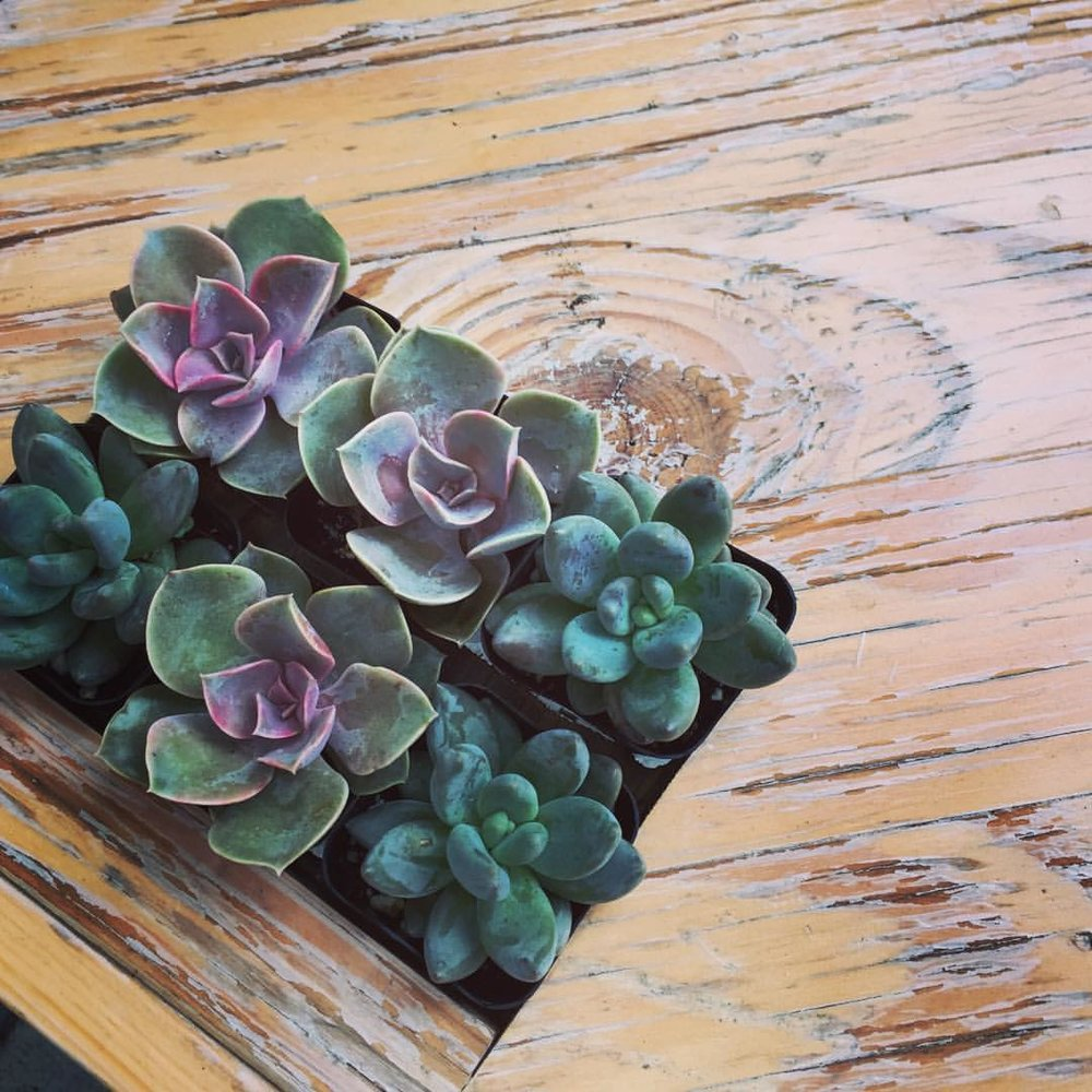 Materials wood succulent planter.jpg