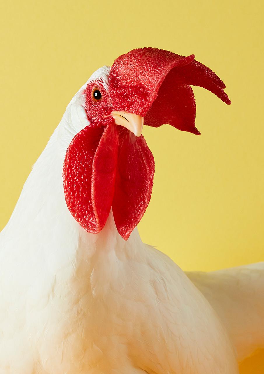 Prim Poulty