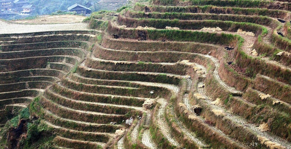 Rice terraces in China. Photo credit: Tine Steiss/Wikimedia