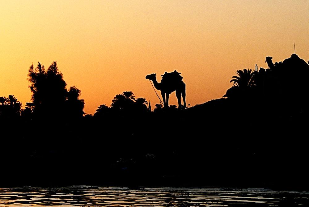 Camel sunset IMG_8468.jpg