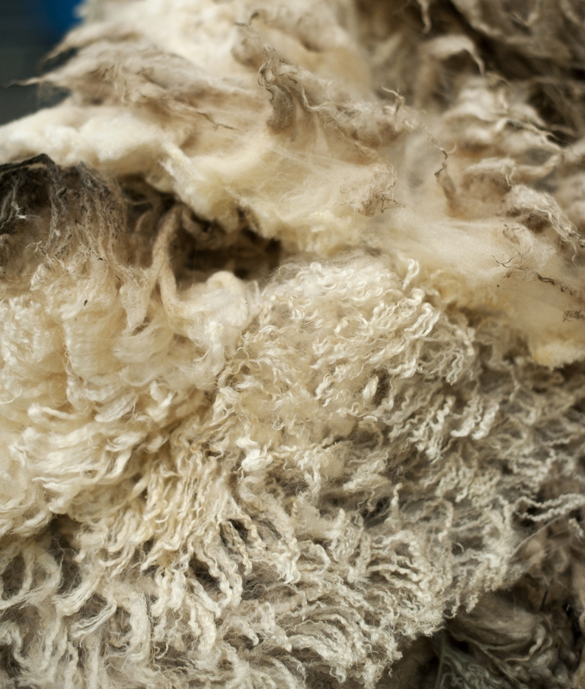 GREASY WOOL - The wool taken straight from a sheep is known as greasy wool and contains a high level of lanolin, dirt and vegetable matter.