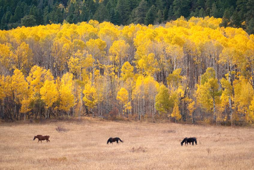 autumn horses istock.jpg