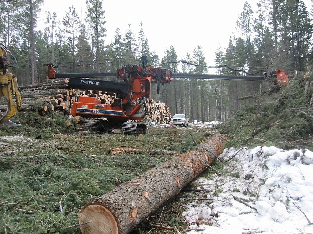 Forestry 2005 003.jpg