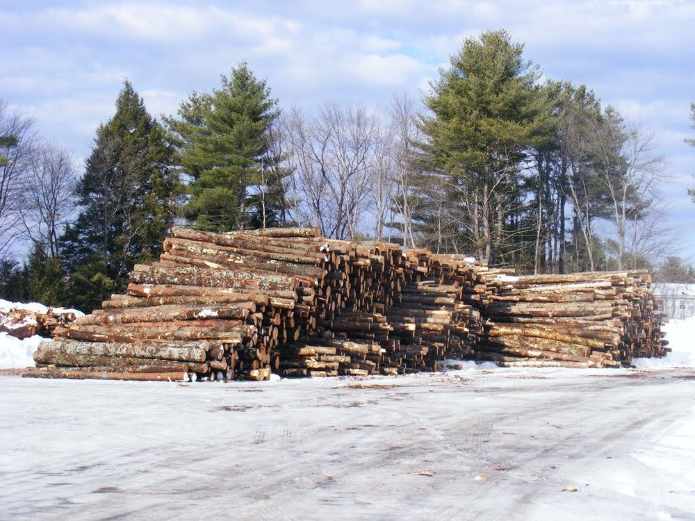 A wood yard resulting from forest management.