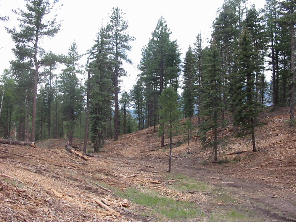 Immediate post-treatment forest condition. Trees and brush were masticated, or ground up, by heavy equipment. The resulting debris will rot and grass cover will increase with the increased sunlight. More space between trees means trees compete with each other less and wildfire is less likely to reach the tree canopy.