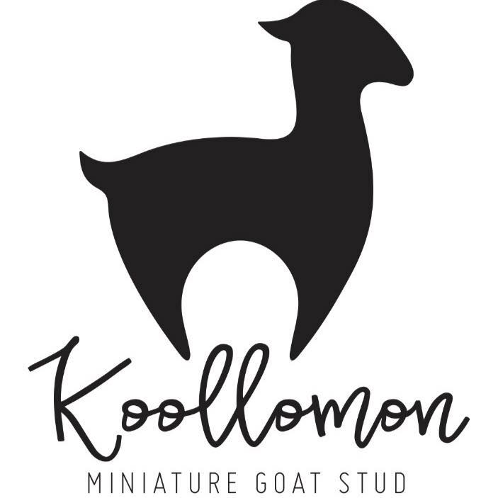 Koollomon Miniature Goat Stud