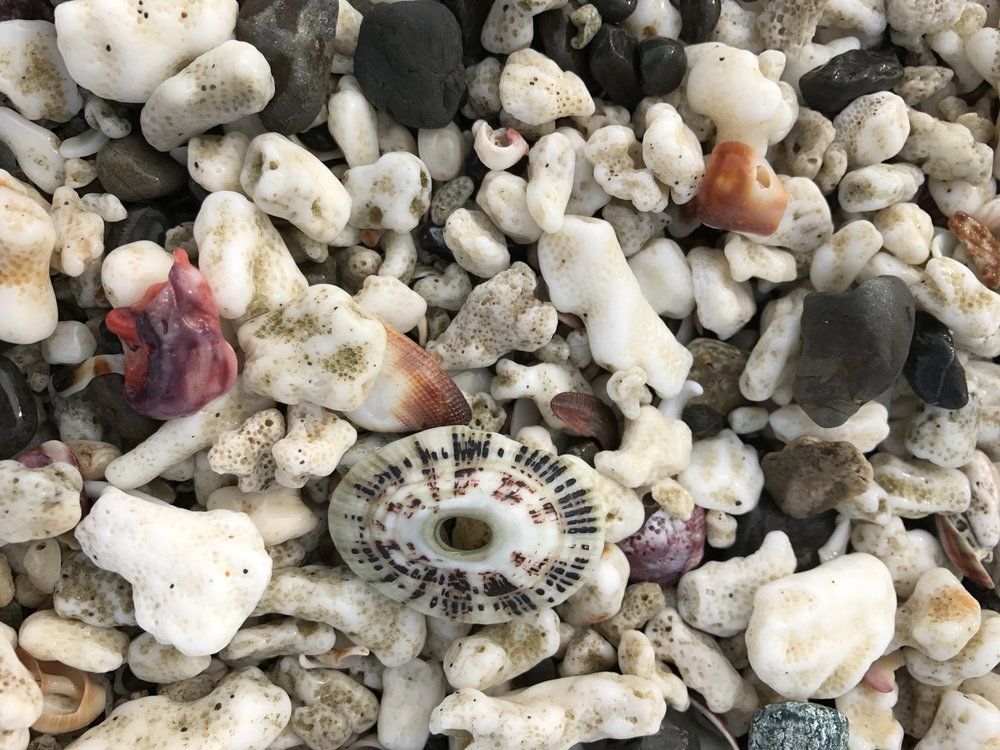 We are Nature. Shells at San Juanillo, Guanacaste, Costa Rica