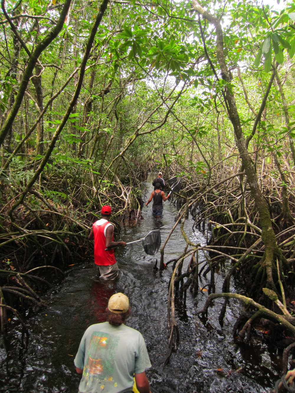 Collecting fishes in La Mosquitia, Nicaragua