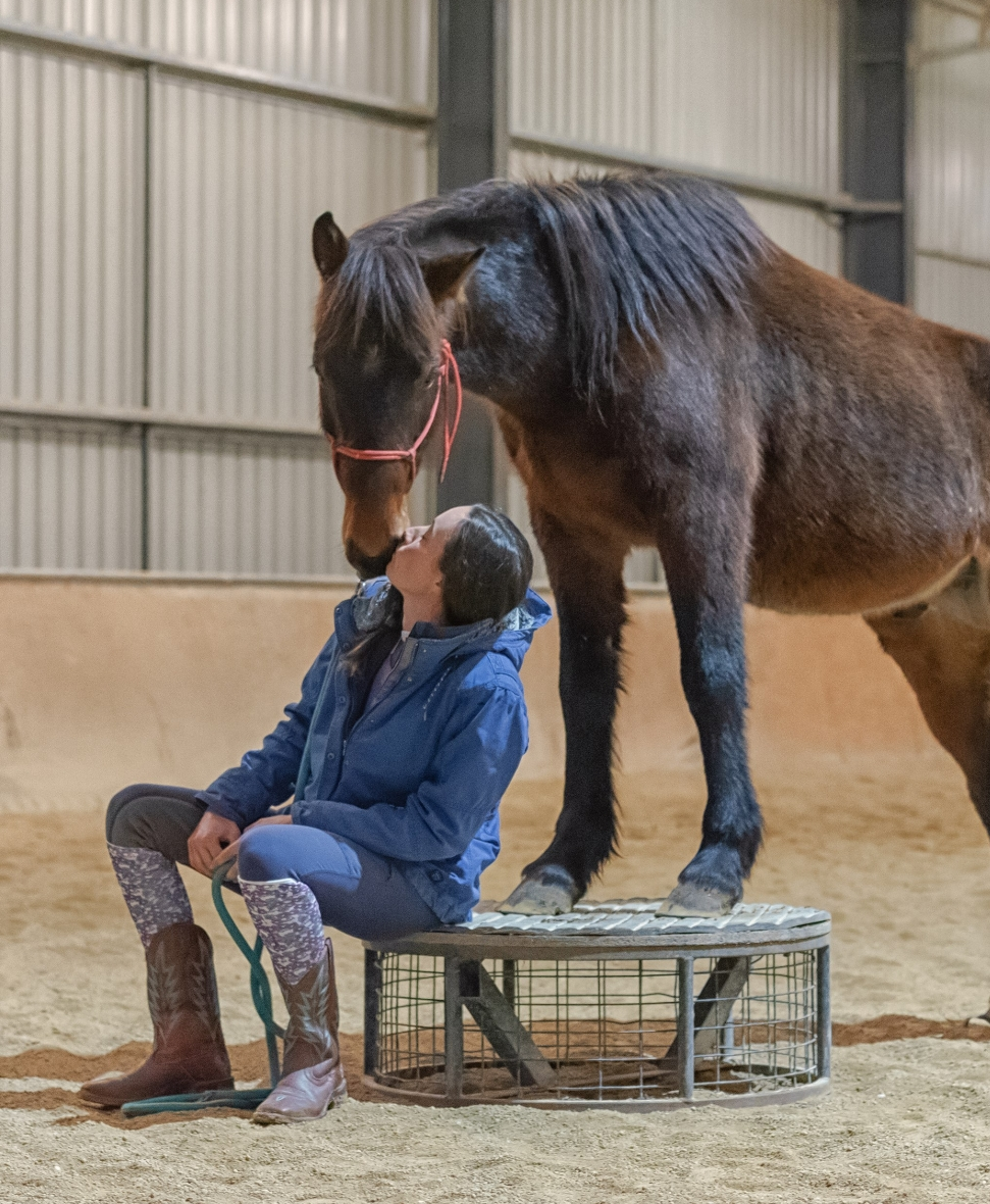 The journey to EQUITANA  Melbourne, 2018 Australian Brumby Challenge. How Lara and Cooper are sharing -  The Equine System    -