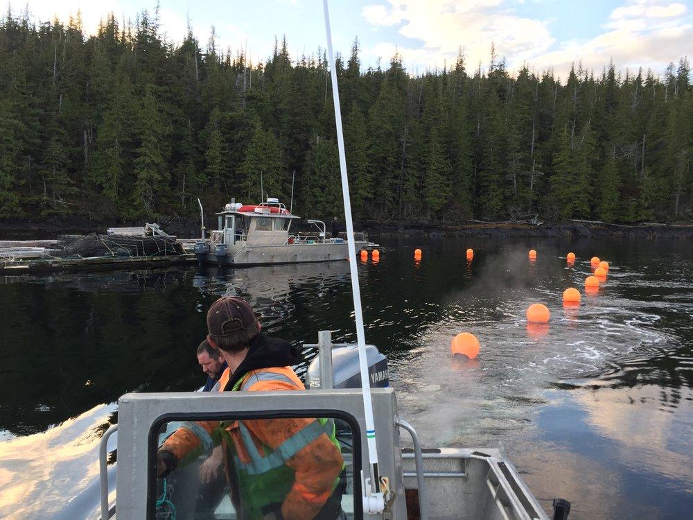 Kelp Longlines 2016.JPG
