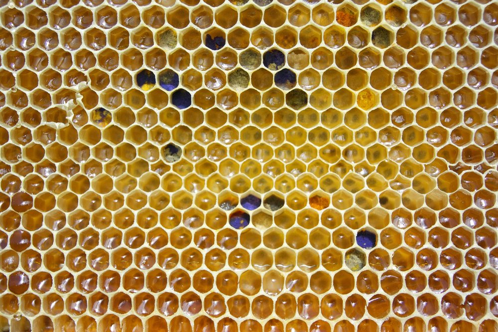 Honey Bees - The simple art of making honey, like you've never experienced before. Our friends from Normandy, France show us the art of making Miel. The best part is you get to take some home and eat it too!Location: SydneyDuration: 4 hoursAges 5 and up (children under 10 must be supervised by an adult)Register your interest below