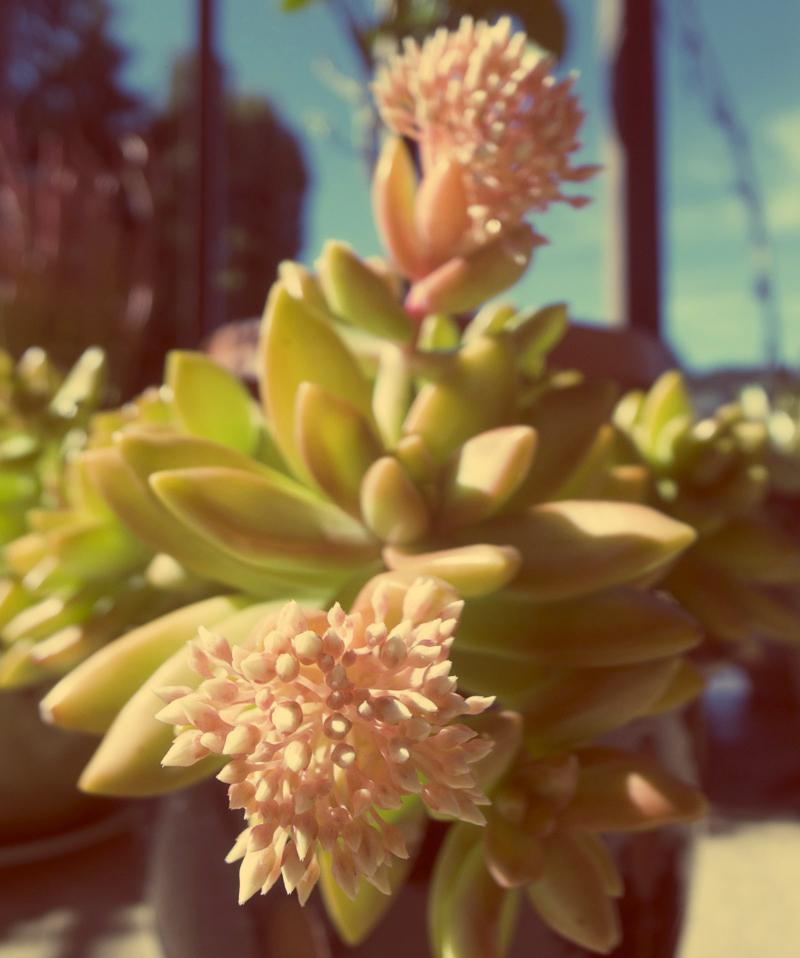 flower filter