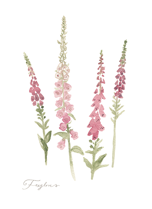 16 foxgloves artwork