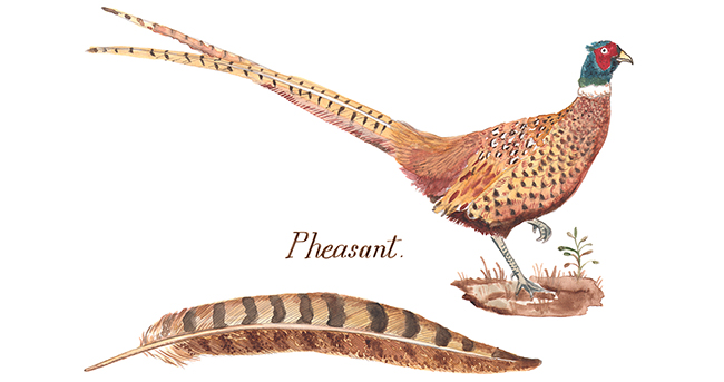 9 pheasant artwork
