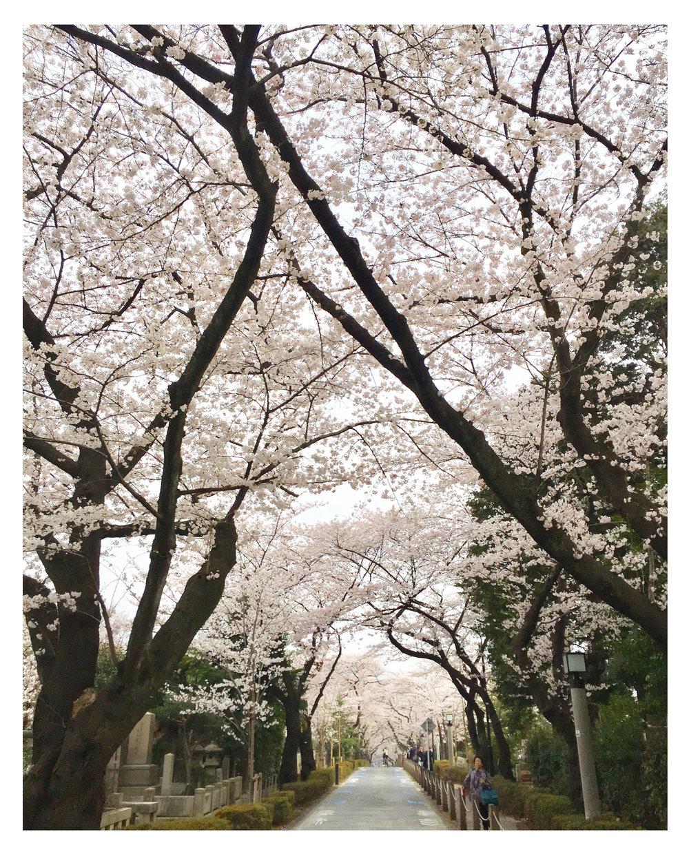 cherry avenue.jpg